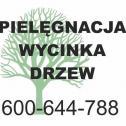 Arborystyka - Arborystyka.eu Kraków i okolice