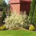 Projektowanie ogrodów - MARIUSZ KACZMAREK Legionowo i okolice