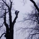 Arborystyka - CZEKAN Mielec i okolice