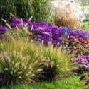 Zaprojektuję Ogród